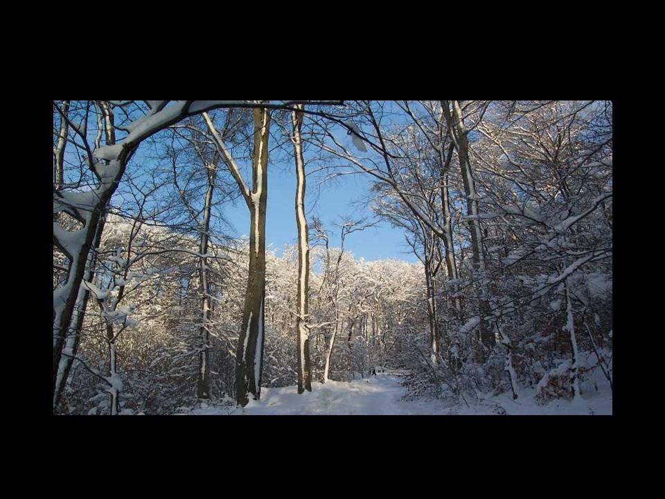 In diesem Sinne wünsche ich Dir/Euch eine zauberhafte Winterzeit Miriam-pps