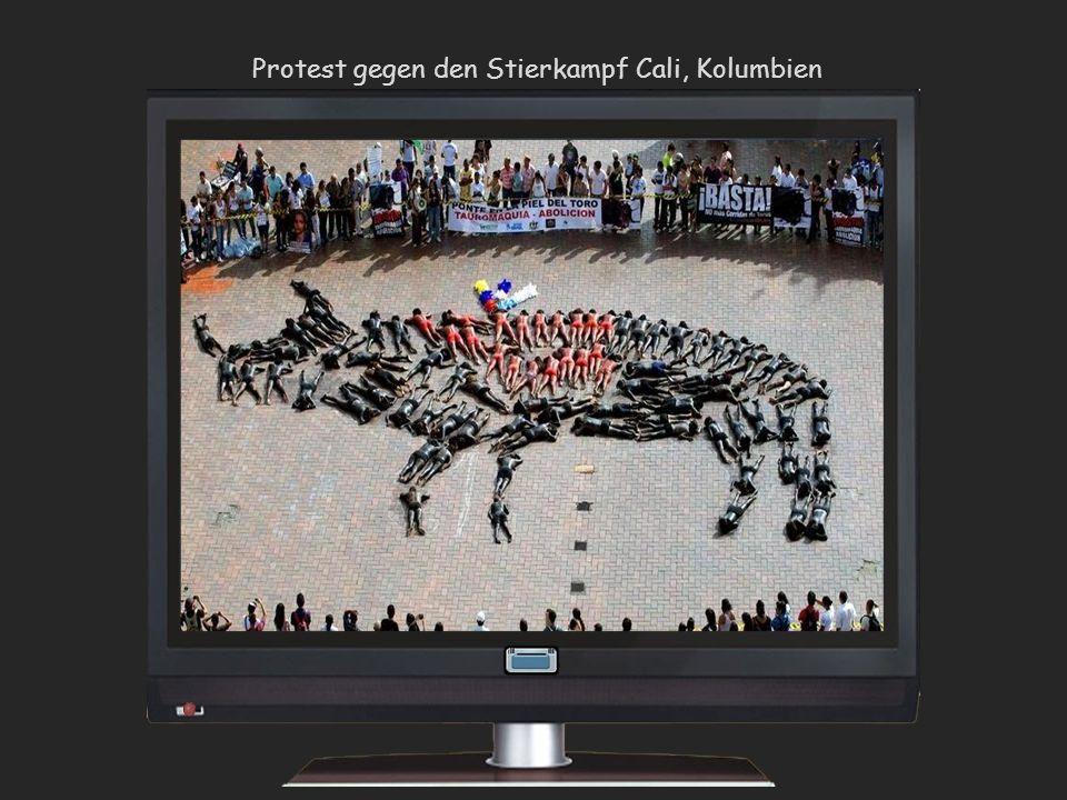 Protest gegen den Stierkampf Cali, Kolumbien