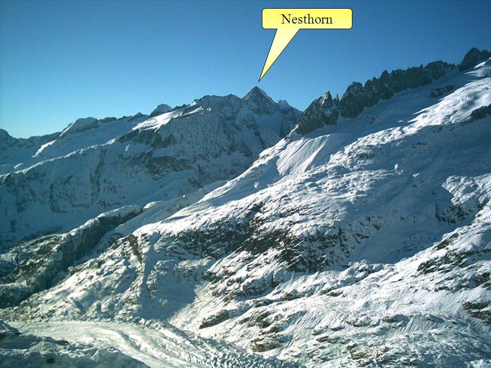 Nesthorn