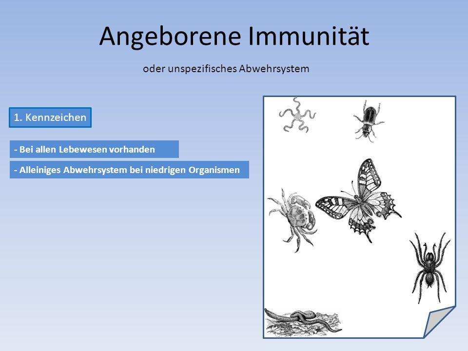 Angeborene Immunität oder unspezifisches Abwehrsystem 1.