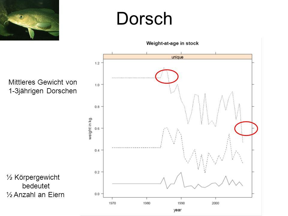 Dorsch Mittleres Gewicht von 1-3jährigen Dorschen ½ Körpergewicht bedeutet ½ Anzahl an Eiern