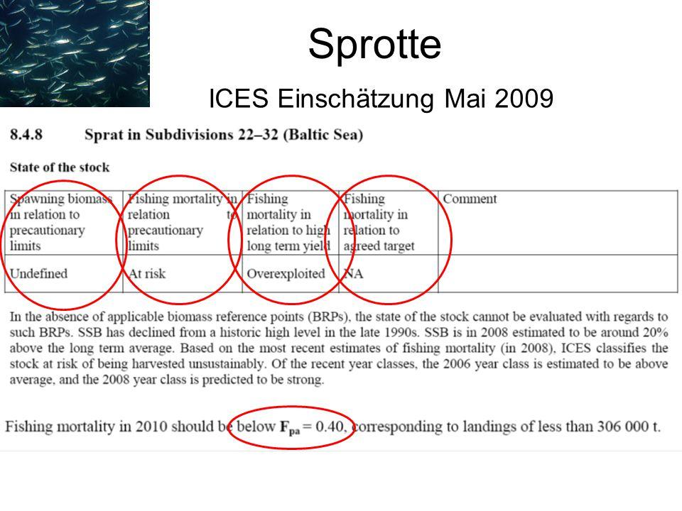 Sprotte ICES Einschätzung Mai 2009