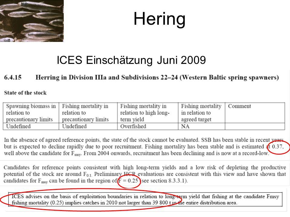 Hering ICES Einschätzung Juni 2009