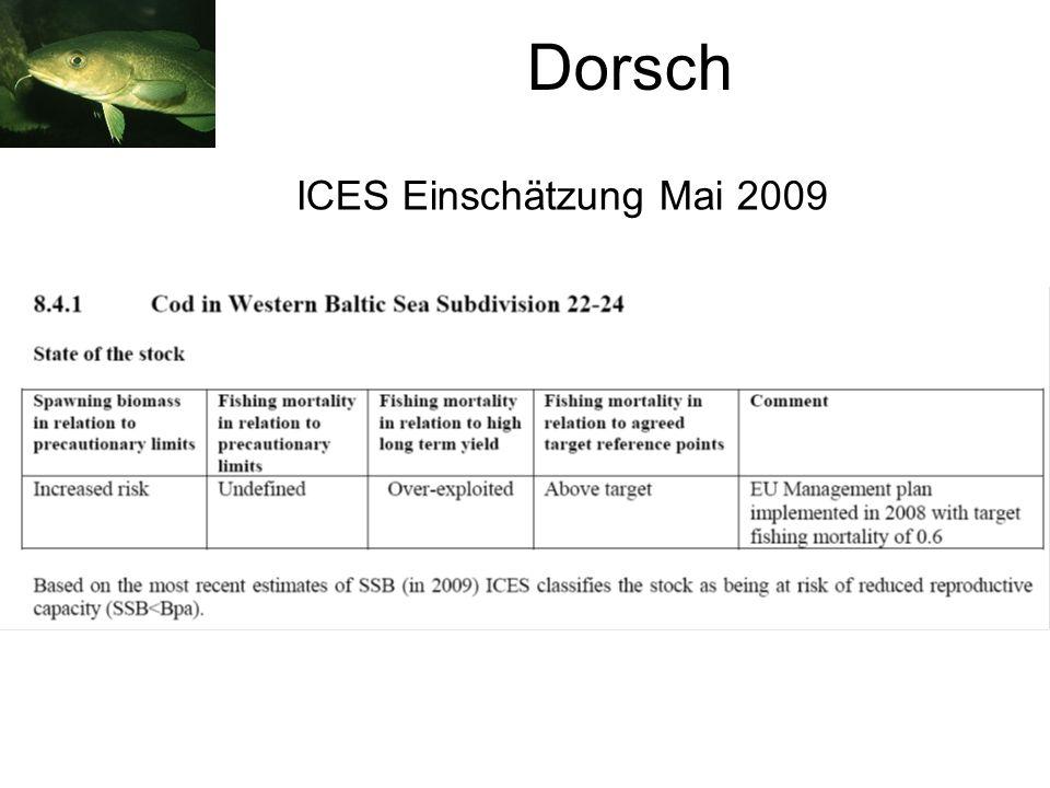 Dorsch ICES Einschätzung Mai 2009