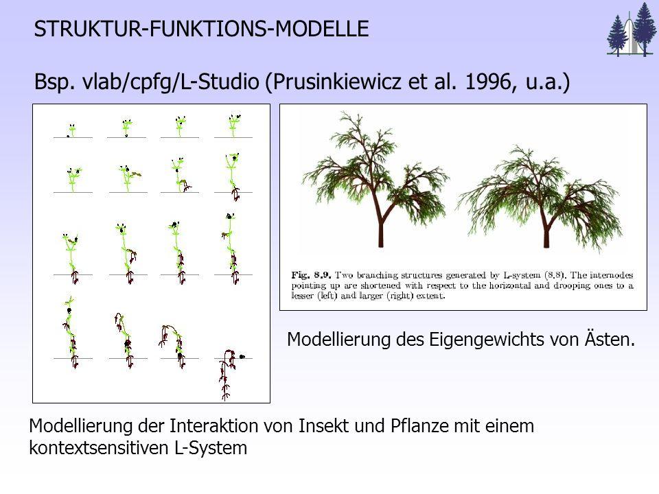 STRUKTUR-FUNKTIONS-MODELLE Bsp.vlab/cpfg/L-Studio (Prusinkiewicz et al.