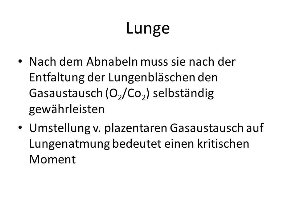 Lunge Nach dem Abnabeln muss sie nach der Entfaltung der Lungenbläschen den Gasaustausch (O 2 /Co 2 ) selbständig gewährleisten Umstellung v. plazenta