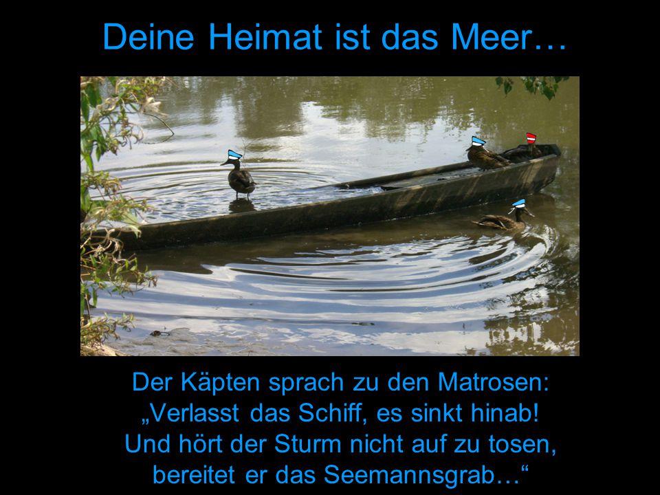 """Deine Heimat ist das Meer… Der Käpten sprach zu den Matrosen: """"Verlasst das Schiff, es sinkt hinab."""