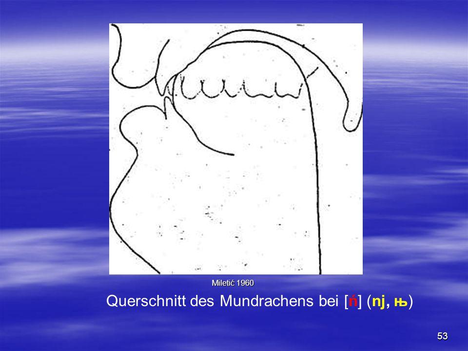 53 Querschnitt des Mundrachens bei [ń] (nj, њ) Miletić 1960