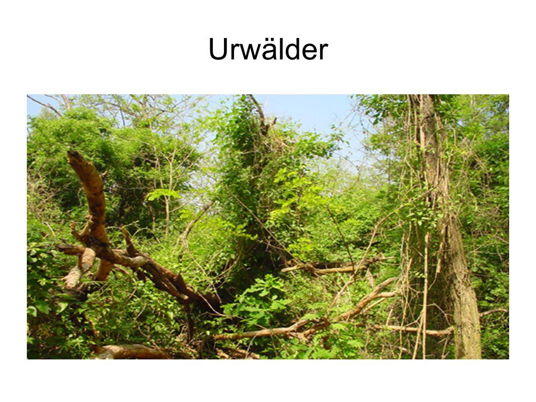 Urwälder