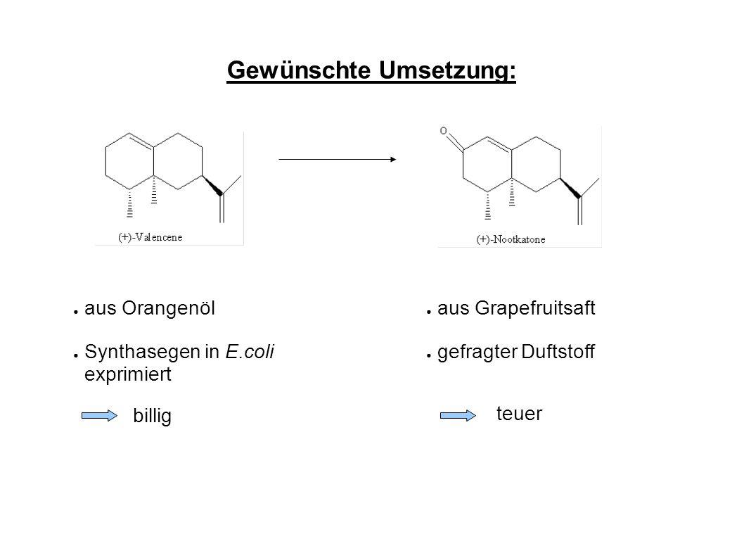 Gewünschte Umsetzung: ● aus Orangenöl ● Synthasegen in E.coli exprimiert ● aus Grapefruitsaft ● gefragter Duftstoff billig teuer