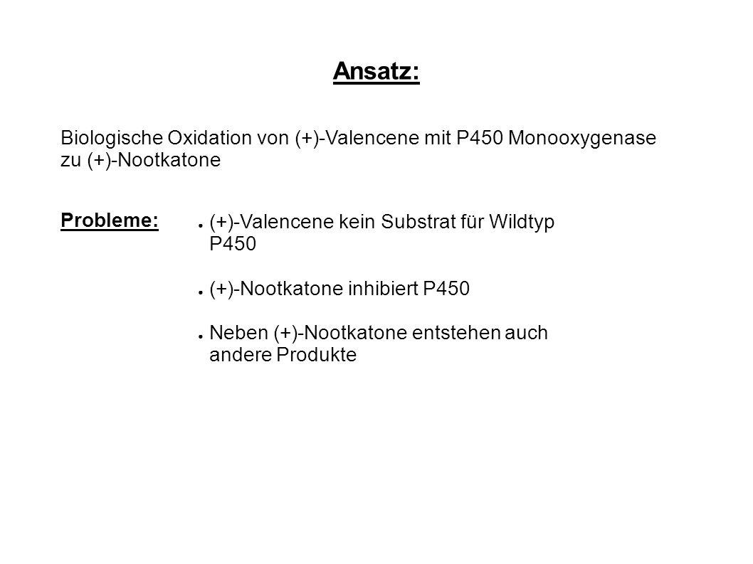 Ansatz: Biologische Oxidation von (+)-Valencene mit P450 Monooxygenase zu (+)-Nootkatone Probleme: ● (+)-Valencene kein Substrat für Wildtyp P450 ● (+)-Nootkatone inhibiert P450 ● Neben (+)-Nootkatone entstehen auch andere Produkte