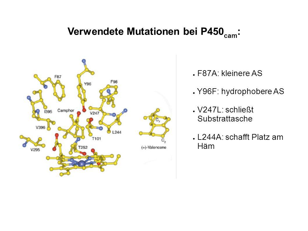 Verwendete Mutationen bei P450 cam : ● F87A: kleinere AS ● Y96F: hydrophobere AS ● V247L: schließt Substrattasche ● L244A: schafft Platz am Häm