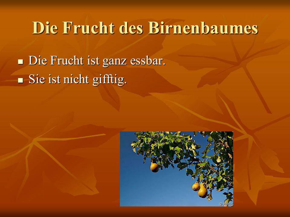 Birnenbaum EXPOSè