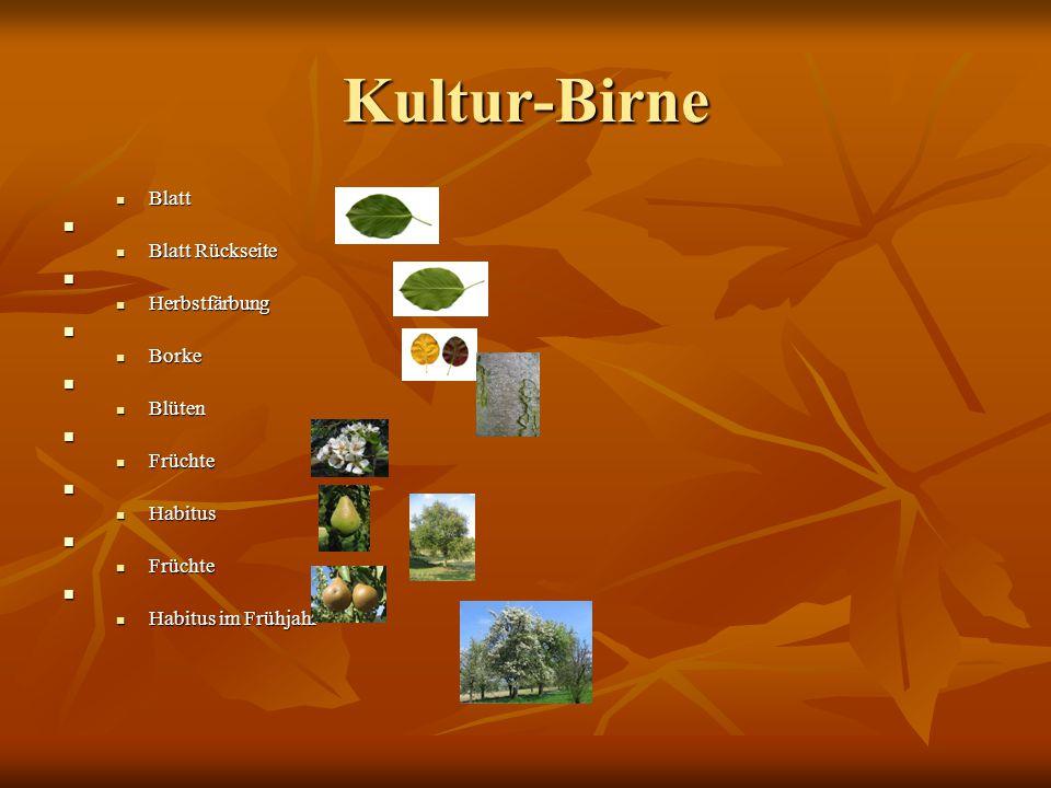 Pirus -Birnenbaum Birnen gehören zu den Rosengewächsen Es gibt ferschidene sorten von Birnen wie die clapps Liebling und conference und gute luisse Es