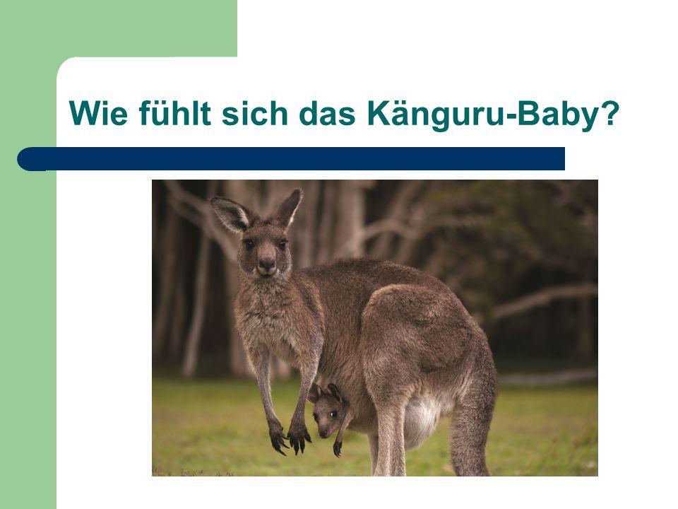 Wie fühlt sich das Känguru-Baby?
