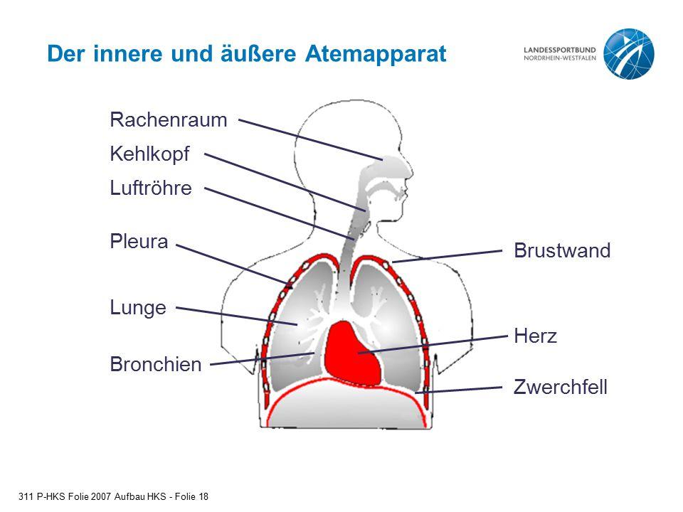 Der innere und äußere Atemapparat 311 P-HKS Folie 2007 Aufbau HKS - Folie 18 Rachenraum Kehlkopf Luftröhre Pleura Lunge Bronchien Brustwand Herz Zwerc
