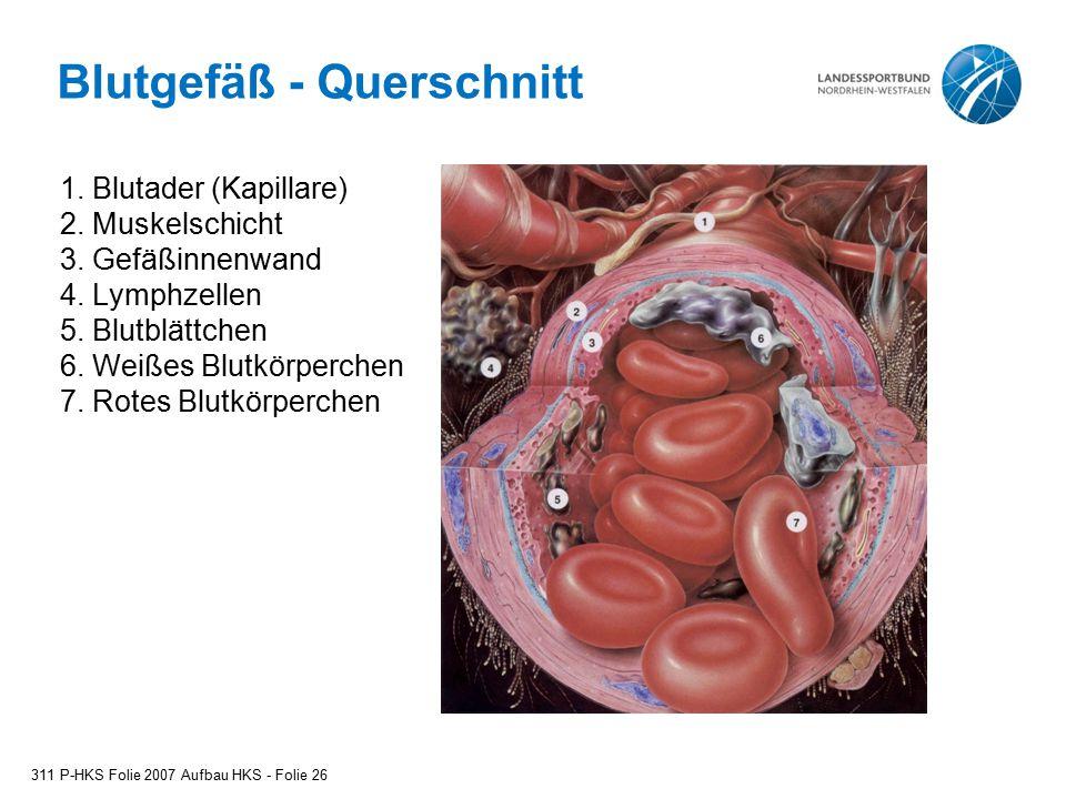 Blutgefäß - Querschnitt 1. Blutader (Kapillare) 2. Muskelschicht 3. Gefäßinnenwand 4. Lymphzellen 5. Blutblättchen 6. Weißes Blutkörperchen 7. Rotes B