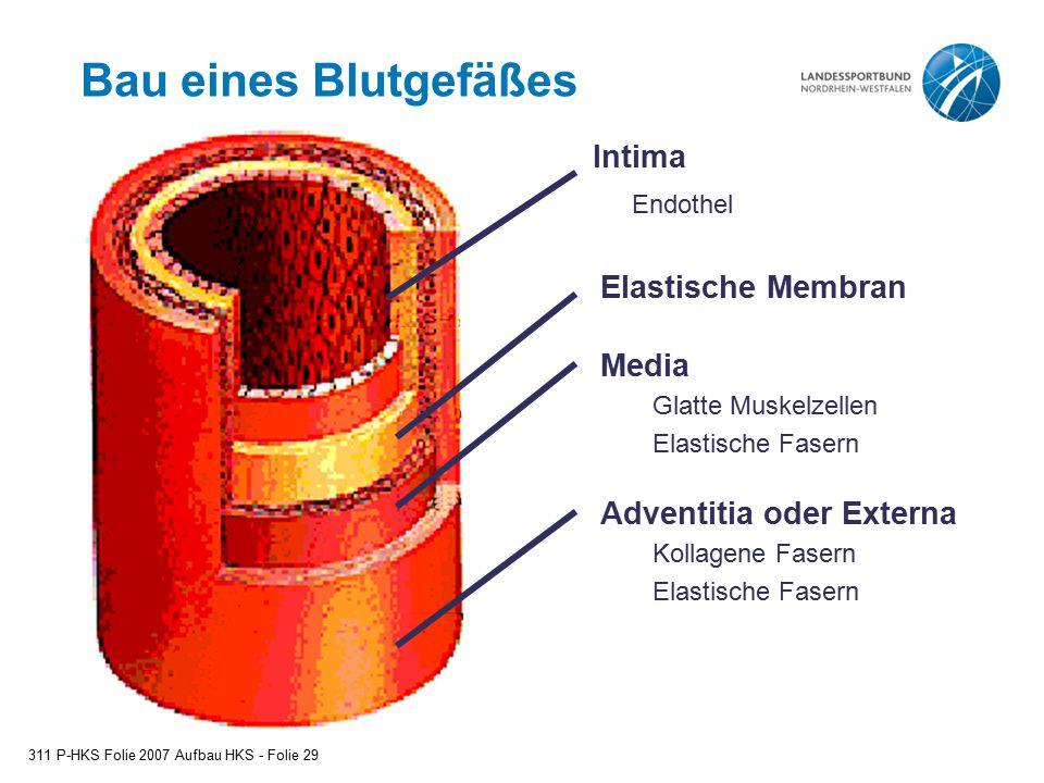 Bau eines Blutgefäßes 311 P-HKS Folie 2007 Aufbau HKS - Folie 29 Adventitia oder Externa Kollagene Fasern Elastische Fasern Media Glatte Muskelzellen