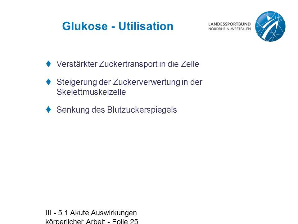 III - 5.1 Akute Auswirkungen körperlicher Arbeit - Folie 25 Glukose - Utilisation  Verstärkter Zuckertransport in die Zelle  Steigerung der Zuckerve