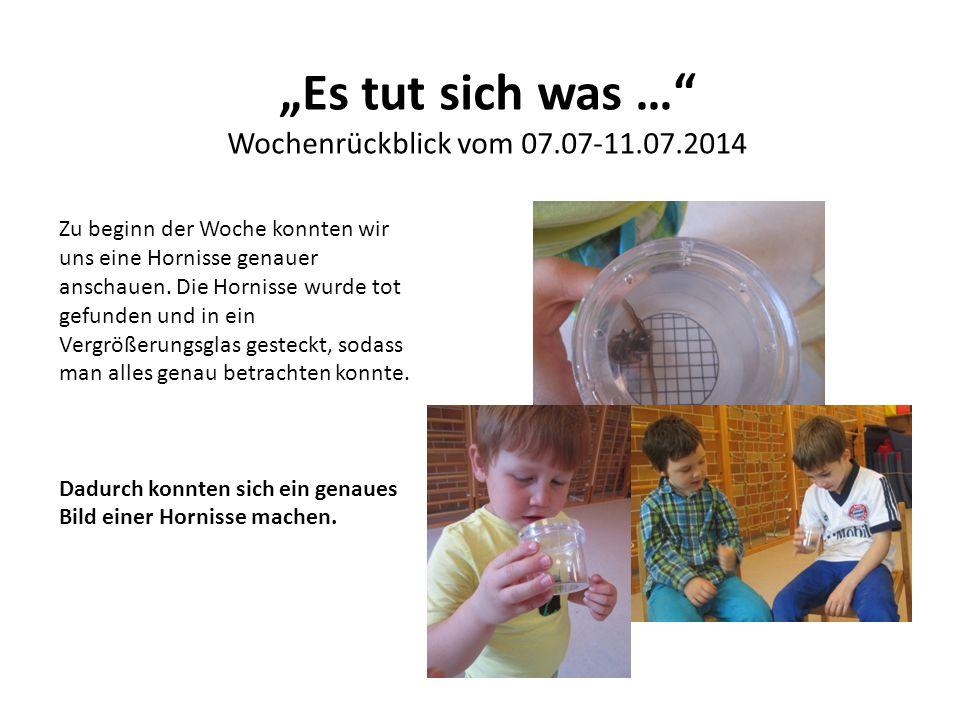 """""""Es tut sich was …"""" Wochenrückblick vom 07.07-11.07.2014 Zu beginn der Woche konnten wir uns eine Hornisse genauer anschauen. Die Hornisse wurde tot g"""