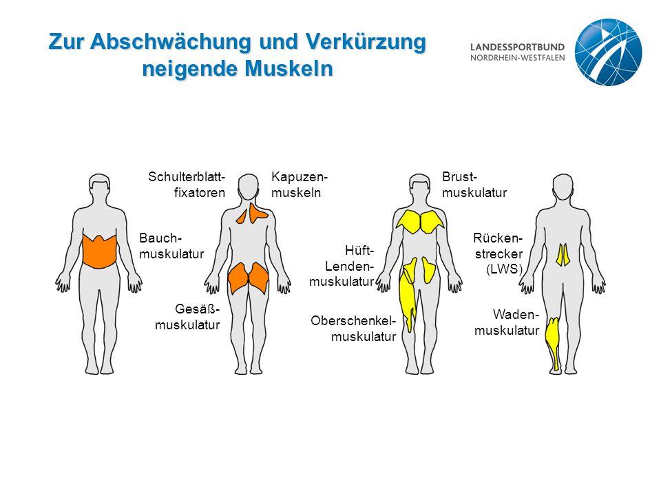 Zur Abschwächung und Verkürzung neigende Muskeln Bauch- muskulatur Gesäß- muskulatur Schulterblatt- fixatoren Kapuzen- muskeln Oberschenkel- muskulatu