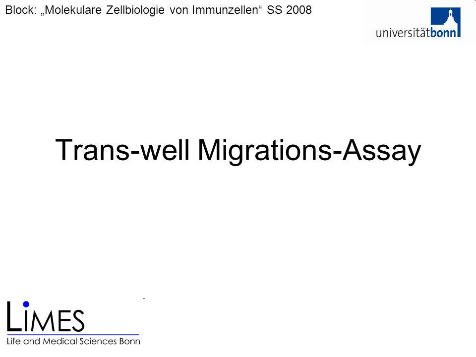 """Trans-well Migrations-Assay Block: """"Molekulare Zellbiologie von Immunzellen"""" SS 2008"""