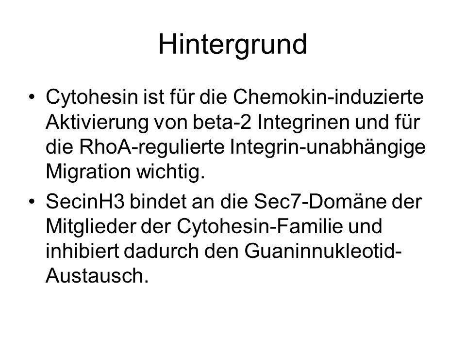 Hintergrund Cytohesin ist für die Chemokin-induzierte Aktivierung von beta-2 Integrinen und für die RhoA-regulierte Integrin-unabhängige Migration wic