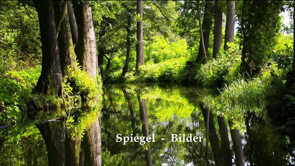 Spiegel - Bilder