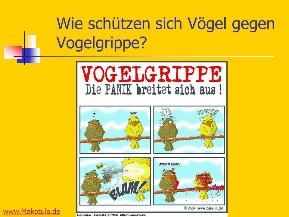 www.Makotula.de Wie schützen sich Vögel gegen Vogelgrippe?