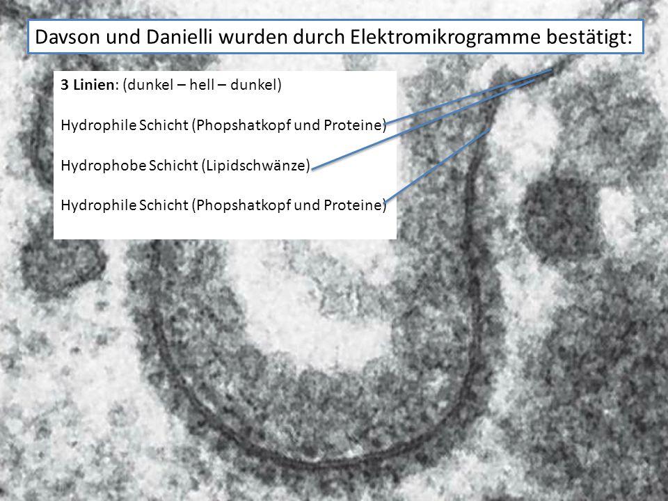 Schwächen des Davson-Danielli- Modells Im EM kann man sehen, dass die Membran nur 7-8nm dick ist.