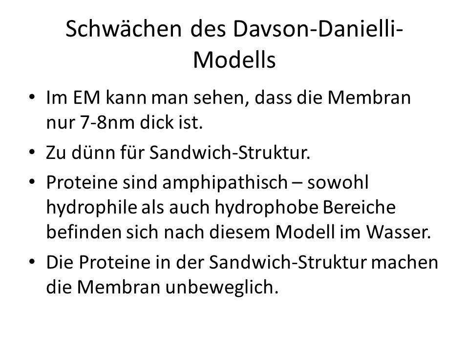 Singer-Nicolson-Modell: heute gültiges flüssig-Mosaik-Modell