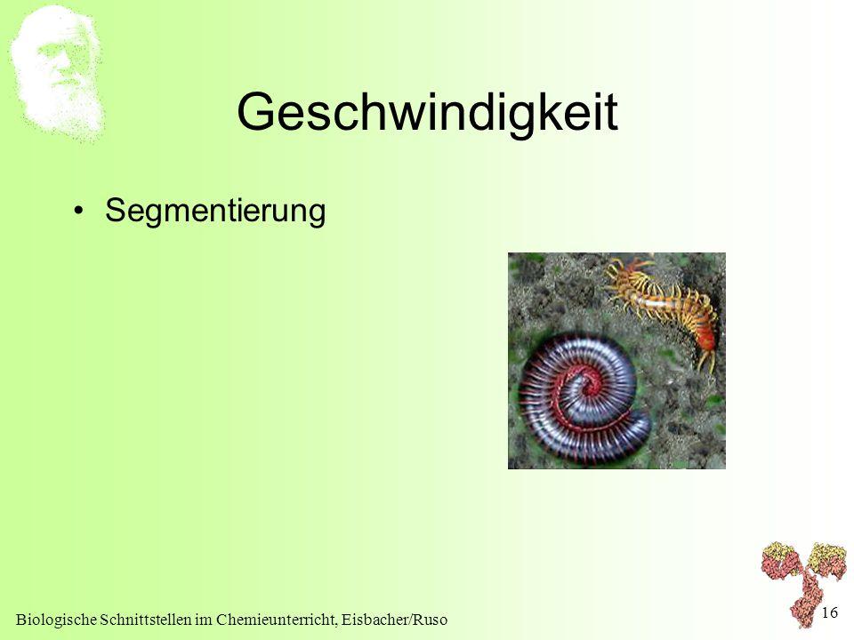 Biologische Schnittstellen im Chemieunterricht, Eisbacher/Ruso 16 Geschwindigkeit Segmentierung