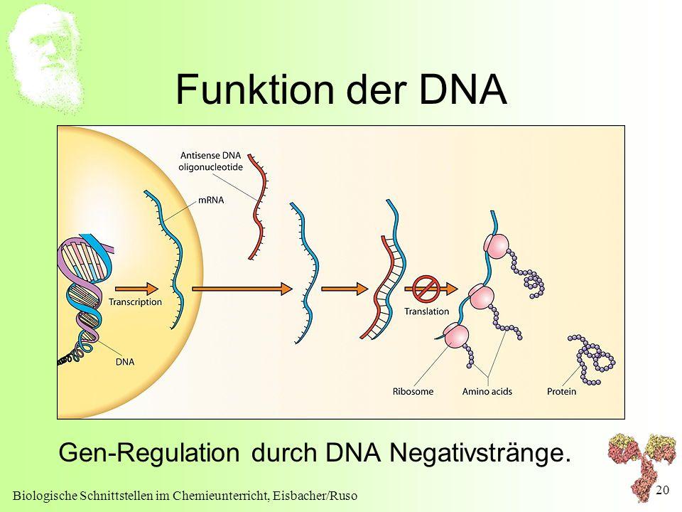 Biologische Schnittstellen im Chemieunterricht, Eisbacher/Ruso 20 Funktion der DNA Gen-Regulation durch DNA Negativstränge.