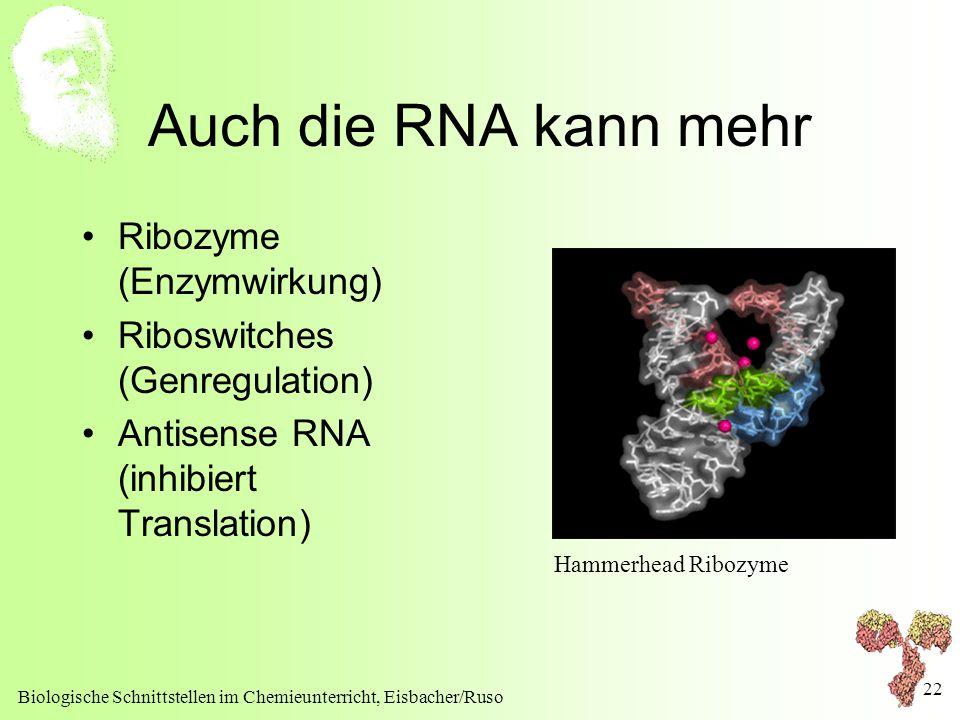 Biologische Schnittstellen im Chemieunterricht, Eisbacher/Ruso 22 Auch die RNA kann mehr Ribozyme (Enzymwirkung) Riboswitches (Genregulation) Antisens