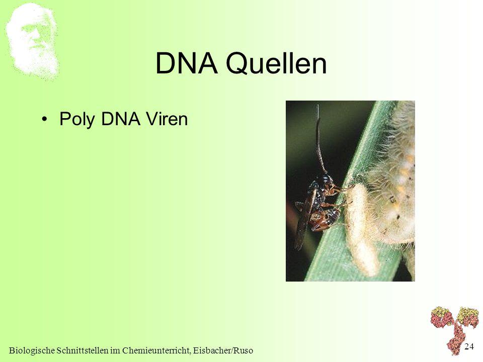 Biologische Schnittstellen im Chemieunterricht, Eisbacher/Ruso 24 DNA Quellen Poly DNA Viren