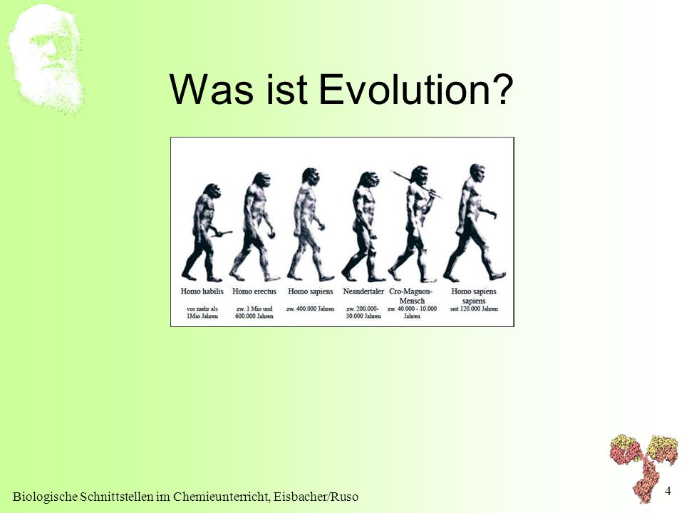 4 Was ist Evolution?