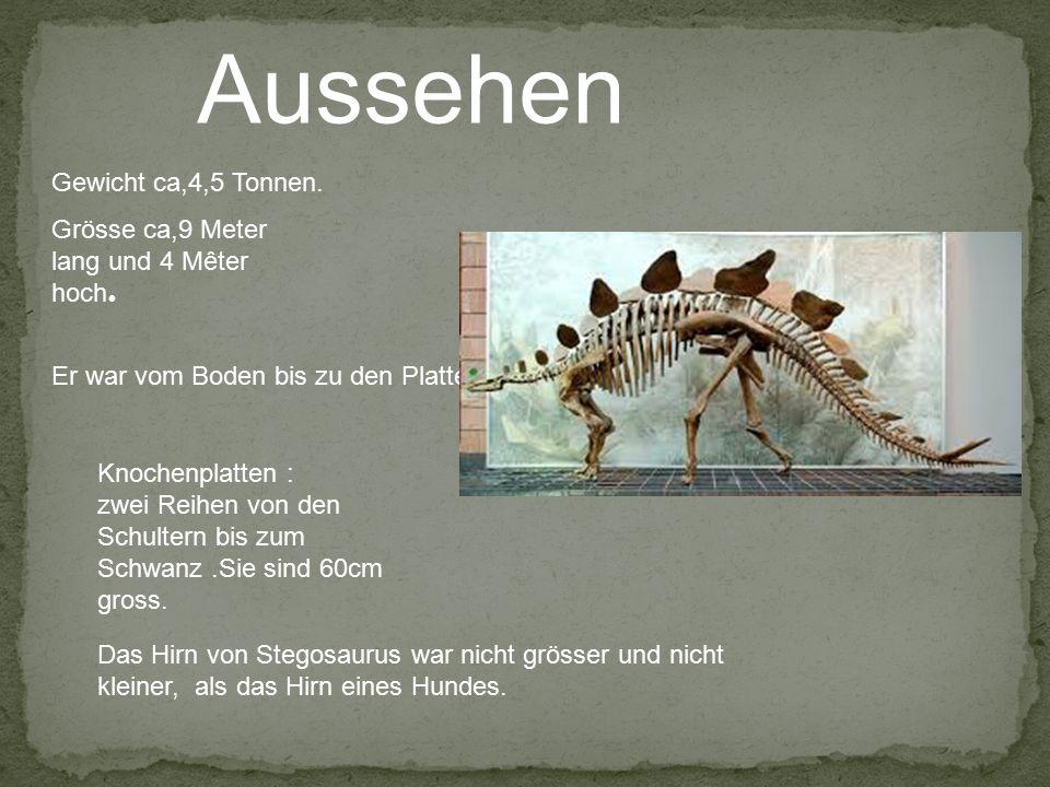 Aussehen Grösse ca,9 Meter lang und 4 Mêter hoch. Gewicht ca,4,5 Tonnen. Knochenplatten : zwei Reihen von den Schultern bis zum Schwanz.Sie sind 60cm