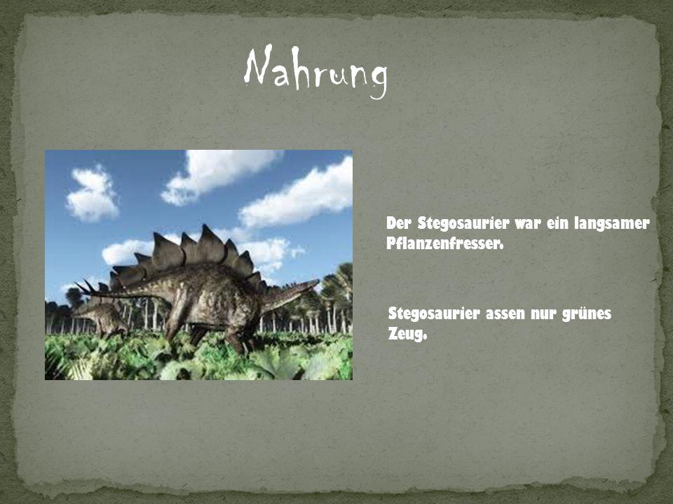 Nahrung Der Stegosaurier war ein langsamer Pflanzenfresser. Stegosaurier assen nur grünes Zeug.