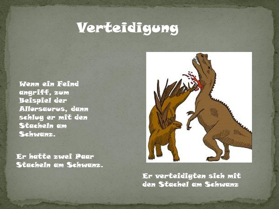 Verteidigung Wenn ein Feind angriff, zum Beispiel der Allorsaurus, dann schlug er mit den Stacheln am Schwanz. Er verteidigten sich mit den Stachel am