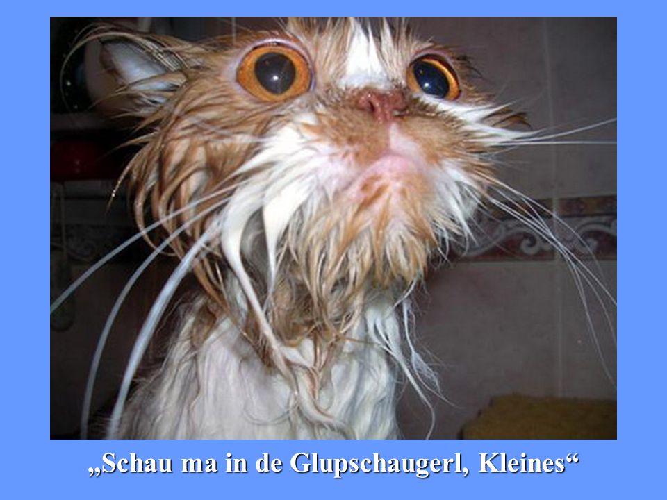 """""""Greif mi nu amoi au und du bist Katzenfutter"""