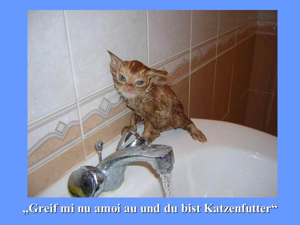 """""""Greif mi nu amoi au und du bist Katzenfutter"""""""