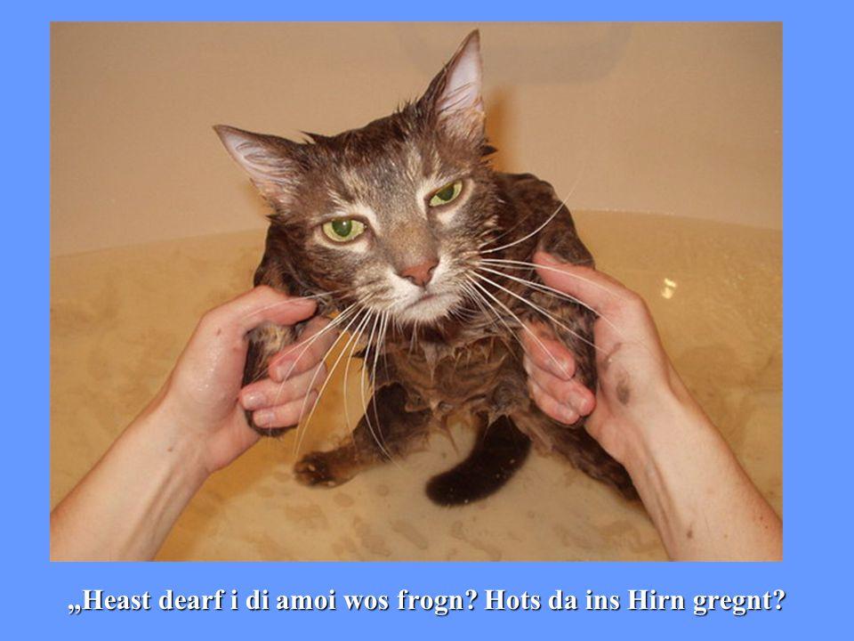 """Heast dearf i di amoi wos frogn? Hots da ins Hirn gregnt?"