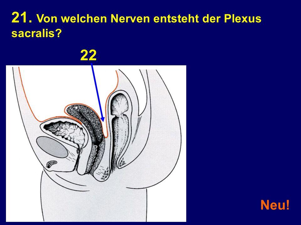 21. Von welchen Nerven entsteht der Plexus sacralis? Neu! 22