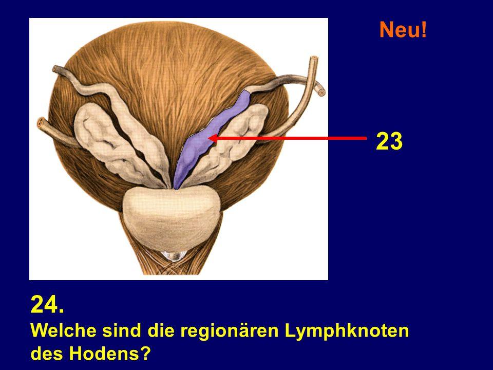 24. Welche sind die regionären Lymphknoten des Hodens? Neu! 23