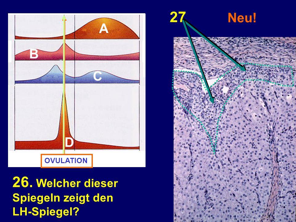 Neu! 26. Welcher dieser Spiegeln zeigt den LH-Spiegel? 27 OVULATION A D C B