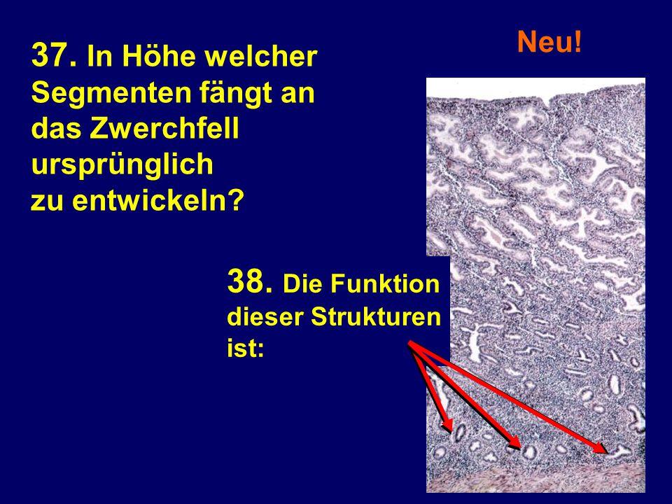 Neu! 38. Die Funktion dieser Strukturen ist: 37. In Höhe welcher Segmenten fängt an das Zwerchfell ursprünglich zu entwickeln?