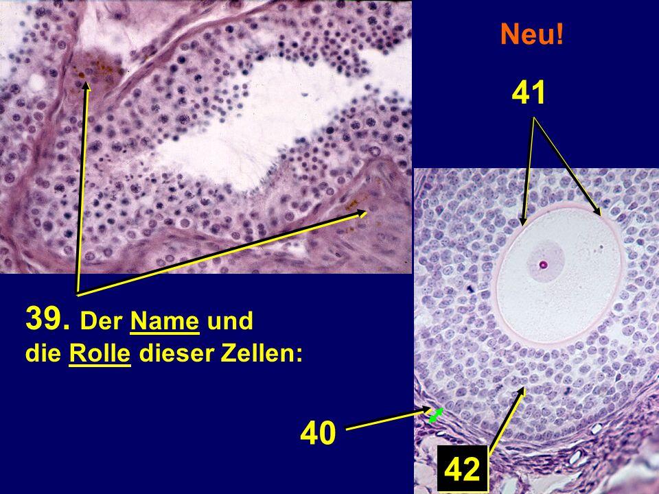 Neu! 39. Der Name und die Rolle dieser Zellen: 40 42 41