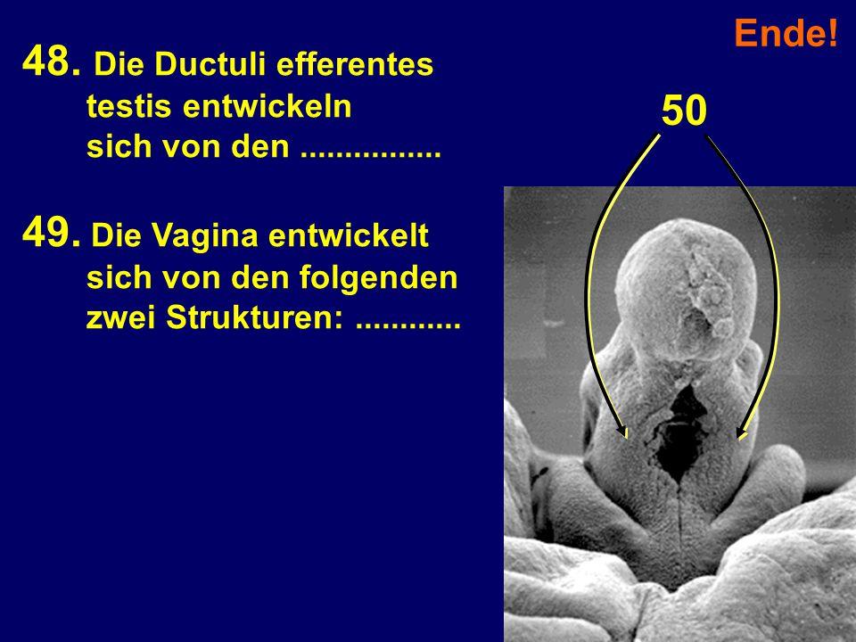 Ende! 48. Die Ductuli efferentes testis entwickeln sich von den................ 49. Die Vagina entwickelt sich von den folgenden zwei Strukturen:.....