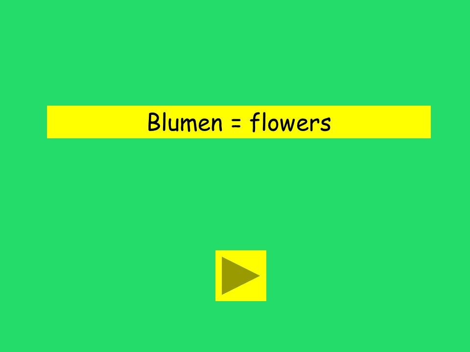 Blumen = flowers