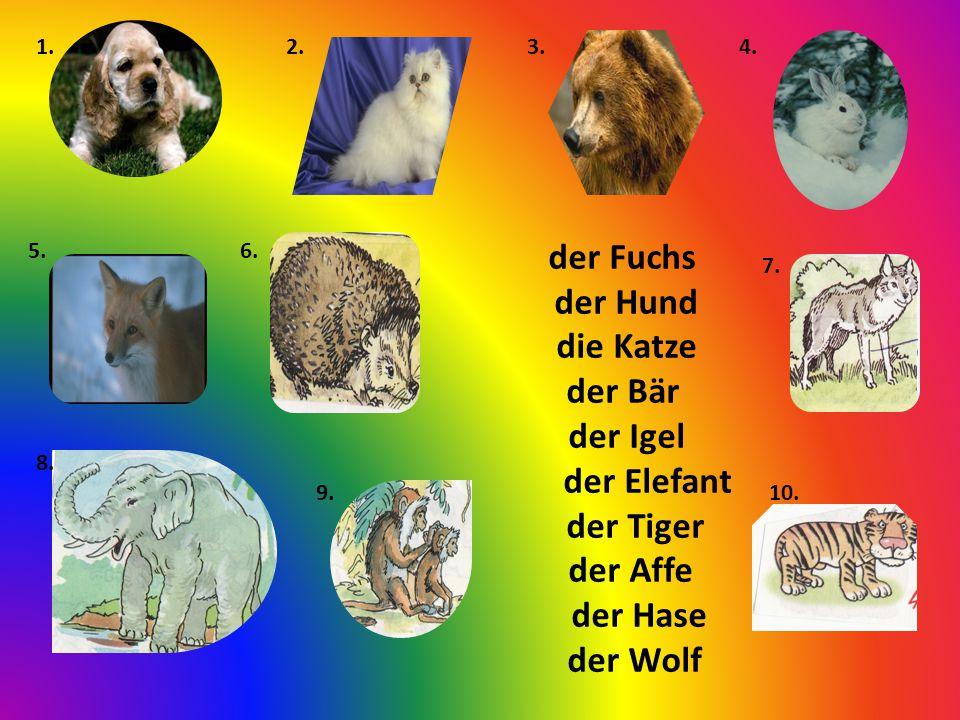 der Fuchs der Hund die Katze der Bär der Igel der Elefant der Tiger der Affe der Hase der Wolf 1.2.3.4.